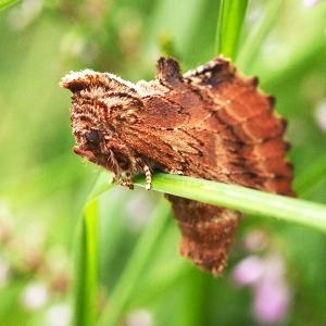 Unusual Moth